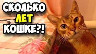 Сколько лет кошке || Аббисинская кошка Фиса требует ласки и внимания к себе || Исторические видео