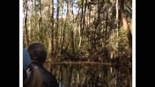 Okefenokee Swamp Park.