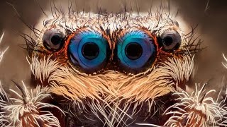 👀 10 most awesome animal eyes ever discovered
