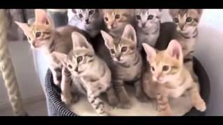 Смешные кошки играют, умываются