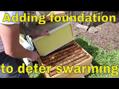 🔵How To Prevent Swarming With No Drawn Combs!