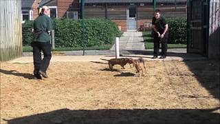 Dogs Trust Leeds - Scooby