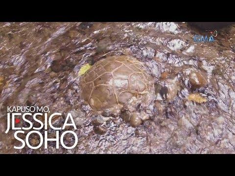 Kapuso Mo, Jessica Soho: Magsasaka, nakapulot daw ng itlog ng dinosaur?