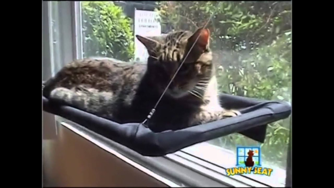 sunny seat window mounted cat bed   youtube  rh   youtube
