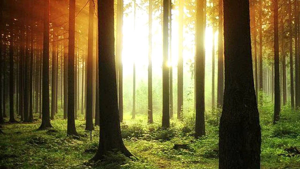 Affective - Virgin Forest - YouTube