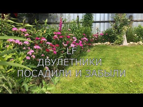 Двулетники (размножаются самосевом)7 неприхотливых растений в моём саду.