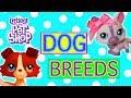 LPS dog breeds list in alphabetical order  ( littlest pet shop )