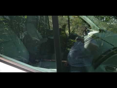 Mark Wallengren - Cubs Break Into Locked Van and Honk Their Way Out