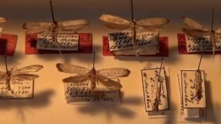 Collection of Lepidoptera: Moths Yponomeutidae (Lepidoptera) in Kyiv, Ukraine thumbnail