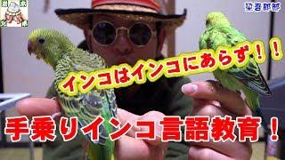 岩本兄弟チャンネルのご視聴ありがとうございます。インコ飼育日記も第...