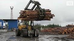 Tällaista on metsätalous Venäjän Kostamuksessa - MT vieraili venäläisellä sahalla