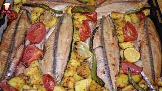 Fırında Palamut Balığı Tarifi Süper Lezzet ( Baked Bonito Fish Recipe)