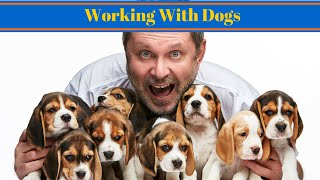Working With Dogs - Become A Dog Trainer