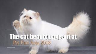 Live: The cat beauty pageant at Pet Fair Asia 2018 盛世美颜喵届盛宴