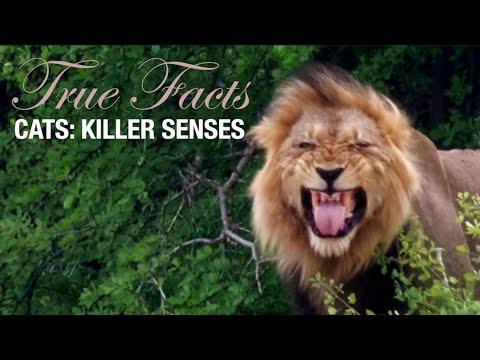 True Facts: Cats' Killer Senses