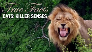 True Facts: Cats' Killer Senses