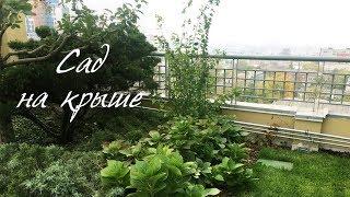 видео Озеленение и сады на крышах и балконах