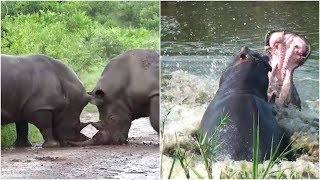 10 Incredible Wild Animal Fights Caught On Camera