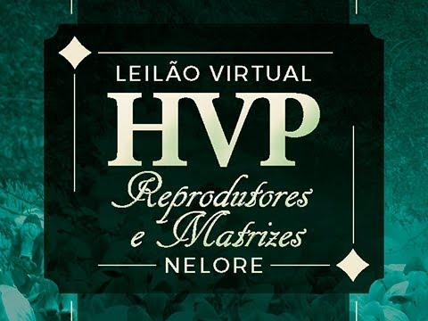 Lote 27   Inocência FIV HVP   HVP 4023   Ice Kiss FIV HVP   HVP 4372 Copy