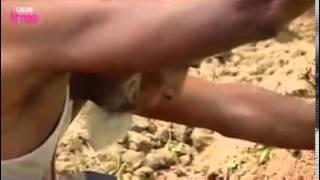 এক বাংলাদেশি সাপ ধরার উস্তাদ না দেখলে কি আর করা