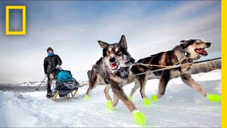 See How Dog Sledding Helped This Photographer Get Her Spark Back | Short Film Showcase