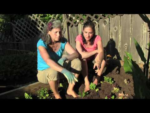 Growing Your Own Food Part 1 of 2