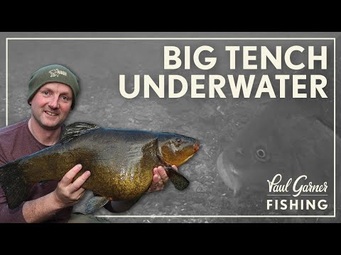 Tench Fishing: Underwater Secrets (2019)