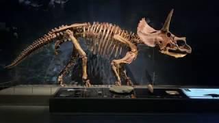 Dinosaur skeletons restored with large scale 3D printing - Builder 3D Printers
