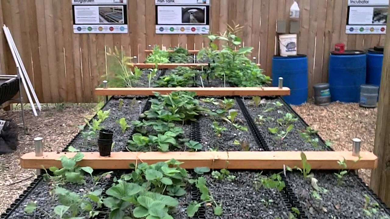 Bioponica Biogarden Sustainable Hydroponics And Aquaponics Youtube