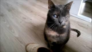Kotałke rozmawia - Talking cat Kotałke :3
