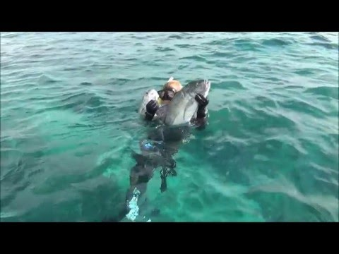 Spearfishing Christmas Island with Red Sea Ocean Adventures 2016