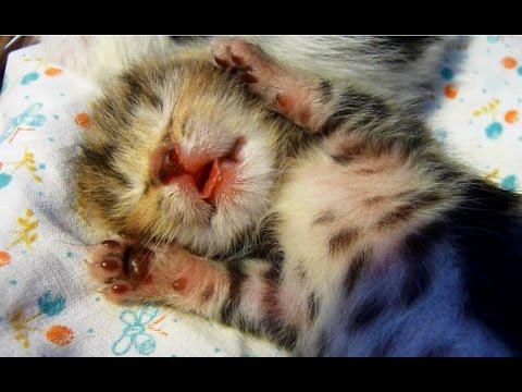 7 Cute Baby Kittens
