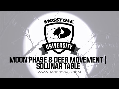 Moon Phase And Deer Movement - Solunar Table