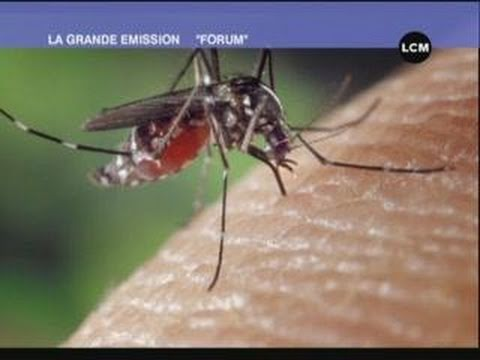 Les risques d'épidémies à Marseille (Forum du 05/10/2010)