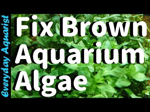 Why New Aquariums Go BROWN | Fixing Brown Diatom ALGAE