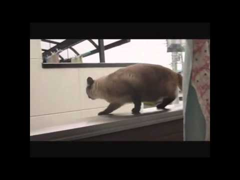 FUS RO DAH! CAT