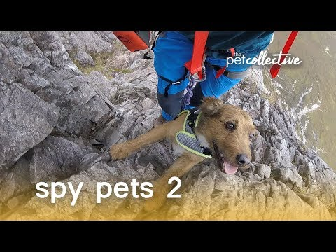 Spy Pets 2 | The Pet Collective