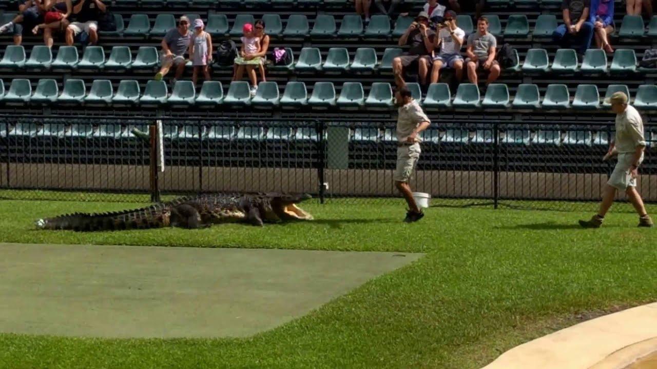 Charlie The Croc At Australia Zoo Youtube