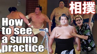 If you happen to be in a city when they are having the Sumo Tournam...