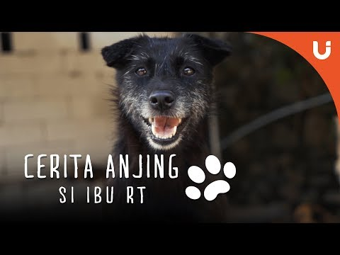 Cerita Anjing - Maple Si Anjing Shelter