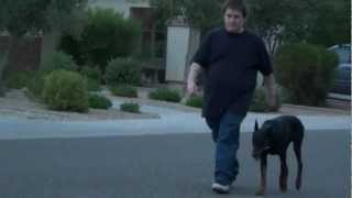 Doberman Pinscher - Dog Training - On/off Leash Obedience Sirius Phoenix Arizona