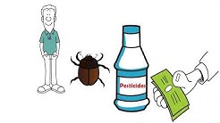 Bed Bugs Exterminator in Houston , Texas