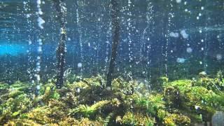【自然の息吹に感動】幻想的で美しい水草の光合成