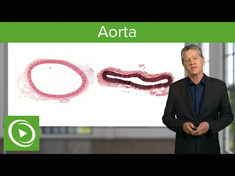 Aorta – Histology | Medical Education Videos