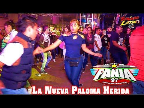 LA NUEVA PALOMA HERIDA - SONIDO FANIA 97 - LO MAS NUEVO - 16 SEPTIEMBRE 2018 CHACHAPA -CON SAMURAI