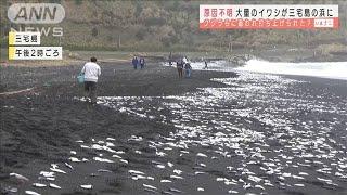 魚 打ち上げ 三宅島