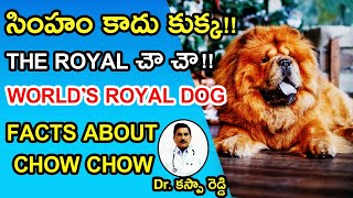 Chow Chow dog breed Intresting Facts About Chow Chow Dog   chow chow dog