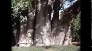 South Rhodesia