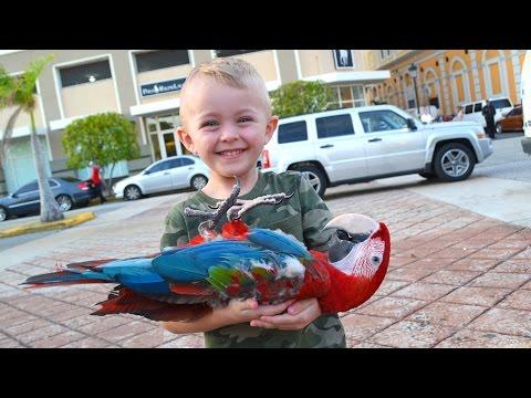 BOY FINDS DEAD BIRD!!