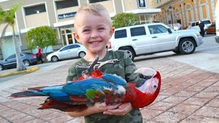 BOY FINDS DEAD BIRD!!